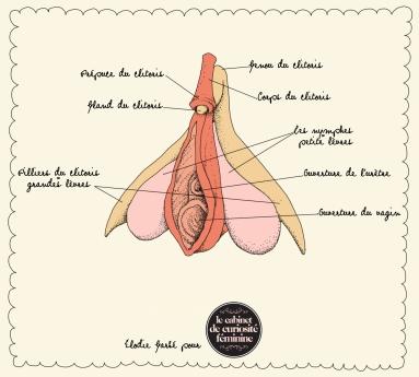 Ceci est un clitoris